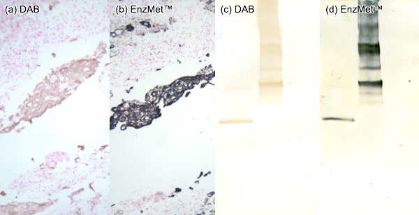 [EnzMet for IHC and Western blot (60k)]
